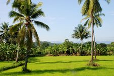 Free Tropical Field Royalty Free Stock Images - 6627999