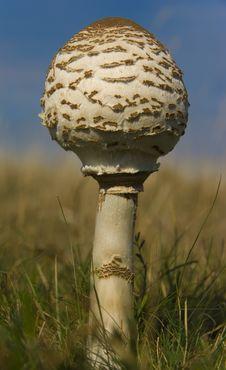 Free Mushroom Royalty Free Stock Images - 6628219