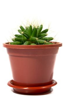 Free Pot With A Cactus Royalty Free Stock Photography - 6628257