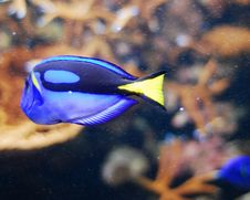 Free Fish Royalty Free Stock Photos - 6628818