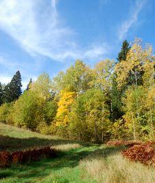 Free Mellow Autumn Royalty Free Stock Photography - 6628917