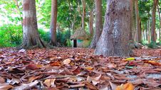 Free Thatched Hut Between Trees Royalty Free Stock Image - 66210876