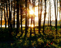 Free Sundown In A Forest Royalty Free Stock Image - 6631226