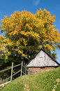 Free Autumn In Carpathian (Romania) Royalty Free Stock Photo - 6632175