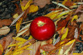 Free Apple On The Leafs. Royalty Free Stock Photo - 6633765