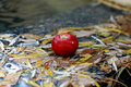 Free Apple On The Leafs. Royalty Free Stock Photography - 6633987
