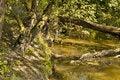 Free Wood Waterside Stock Image - 6639051