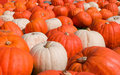 Free Orange And White Pumpkins Stock Images - 6639534