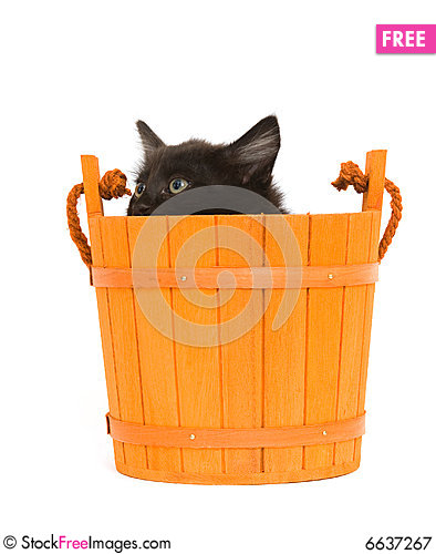 Free Kitten And Orange Barrel Royalty Free Stock Photography - 6637267