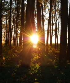 Free Sundown In The Wood Royalty Free Stock Photos - 6631358