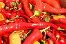 Free Bunch Of Hot Chili Peppers Royalty Free Stock Photo - 6631415