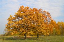 Free Autumn On The Meadow Royalty Free Stock Photography - 6631547