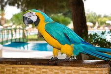 Free Parrot Stock Images - 6631994