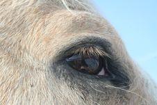 Free Equine Eye Study - Palomino Horse Royalty Free Stock Image - 6633106