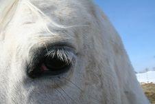 Free Equine Eye Study -Arabian Stock Image - 6633221