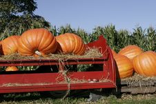 Free Pumpkins On Red Farm Wagon Royalty Free Stock Image - 6633236