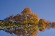 Free Fall Reflections Royalty Free Stock Photo - 6633845