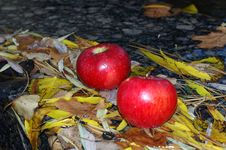 Apples On The Leafs. Royalty Free Stock Image