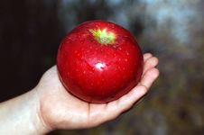 Free Apple On Hand. Royalty Free Stock Photos - 6634008