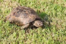 Free Turtle Stock Photo - 6634170