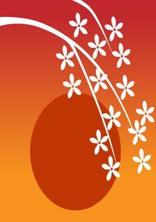 Free White Flowers On Sunset Royalty Free Stock Photo - 6634505
