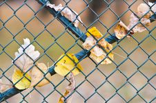 Free Metal Net Fence Stock Photo - 6634930