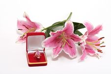 Free Ring In Red Box Stock Photography - 6635312