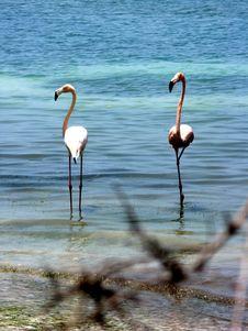Free Pink Flamingo Royalty Free Stock Photography - 6635397
