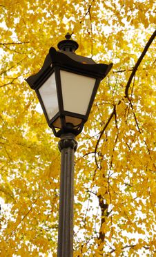 Free Lantern Royalty Free Stock Photos - 6635988