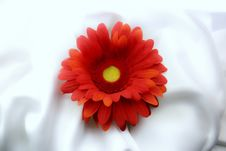 Free Red Flower Stock Photos - 6636223