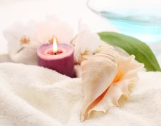 Free Romantic Shell Stock Images - 6637034