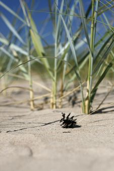 Free Pine Cone Stock Image - 6637141