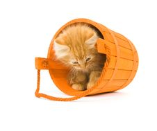 Free Kitten In An Orange Barrel Stock Photo - 6637210