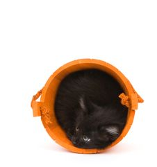 Kitten And Orange Barrel Royalty Free Stock Image