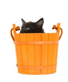 Kitten And Orange Barrel Royalty Free Stock Photography