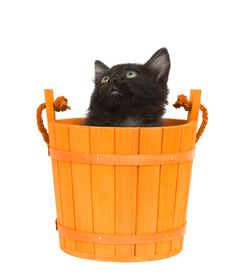 Kitten And Orange Barrel Stock Photo