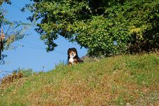 Free Dog In The Hill Royalty Free Stock Images - 6637449