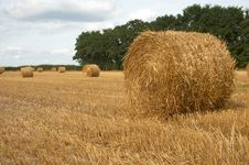 Free Hay Bales Royalty Free Stock Photo - 6637585