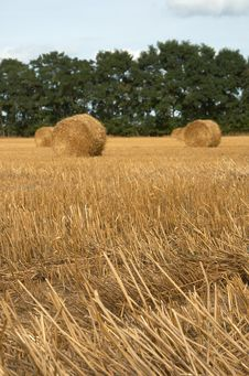Free Hay Bales Stock Photography - 6637612