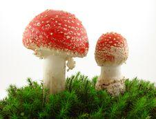 Free Mushrooms Royalty Free Stock Photography - 6638457