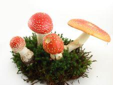 Free Mushrooms Stock Image - 6638621