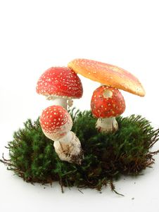 Fly Agaric Mushrooms Royalty Free Stock Photo