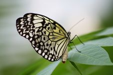 Free Butterfly Wings Royalty Free Stock Photo - 6638705