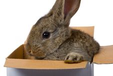 Free Bunny On Box As Gift Royalty Free Stock Images - 6638799