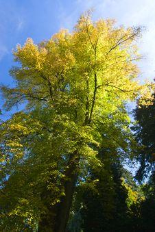 Free Autumn Tree Stock Photo - 6638800