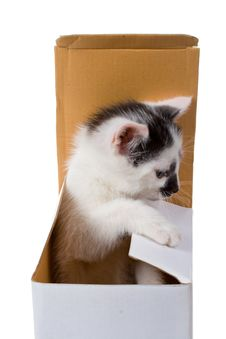 Free Kitten On Box Royalty Free Stock Images - 6638899