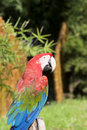 Free Parrot Royalty Free Stock Images - 6641609