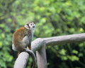 Free Monkey Stock Photos - 6642023