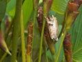 Free Hidden Frog Stock Photography - 6647652