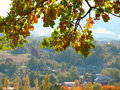 Free Autumn Leaves Royalty Free Stock Image - 6648196